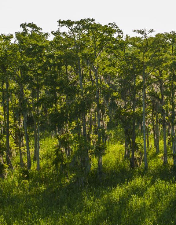 Pointe-Aux-Chenes Wildlife Management Area